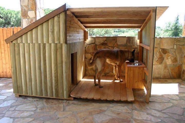 بيت كلب السيسي